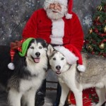 Pet Photos w Santa 12-6-14 (5)